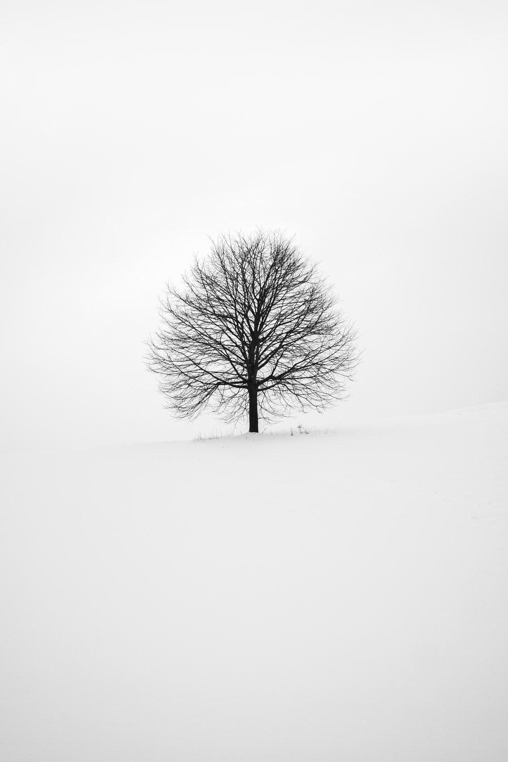 Black And White Wallpapers: Free HD Download [500+ HQ.