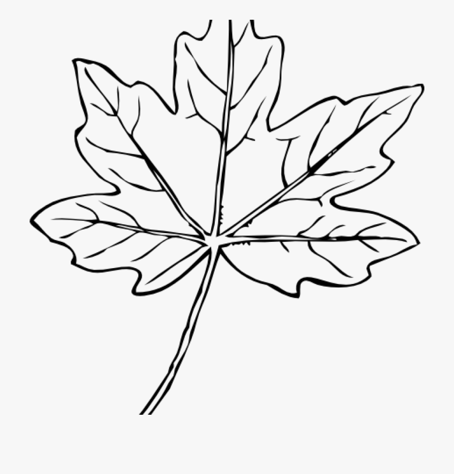 Maple Leaf Clipart Maple Leaf Clip Art At Clker Vector.