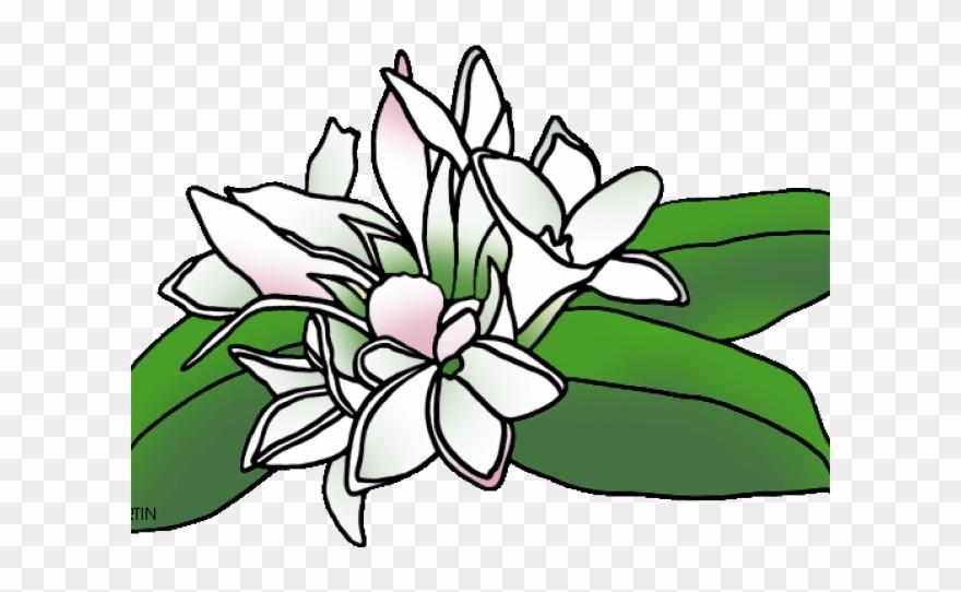 White Flower Clipart Mayflower.