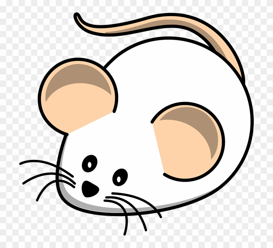 Cartoon Mouse Pictures.