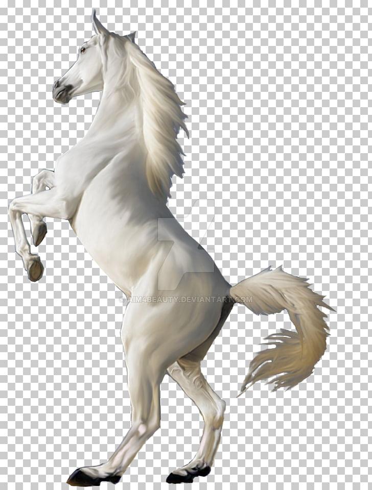 Mustang Desktop White , mustang PNG clipart.
