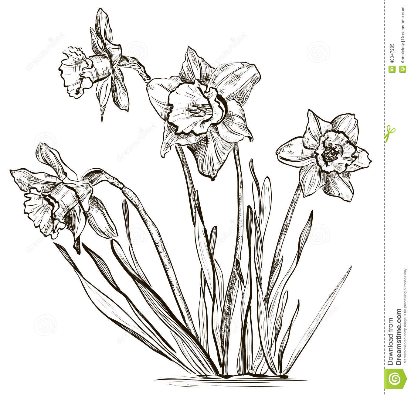 eletragesi: Daffodil Clipart Black And White Images.