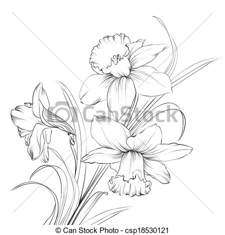 Narcissus Stock Illustrations. 1,609 Narcissus clip art images and.
