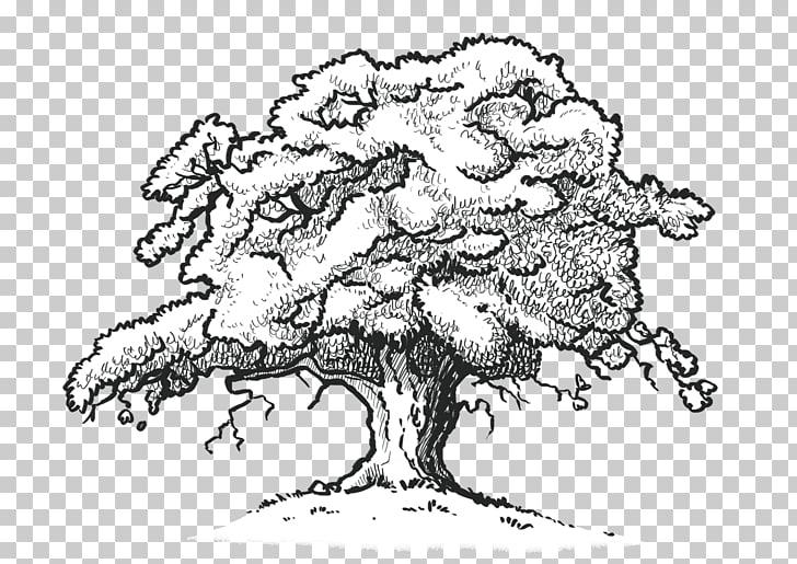 Northern Red Oak White oak Drawing Tree Desktop , line.