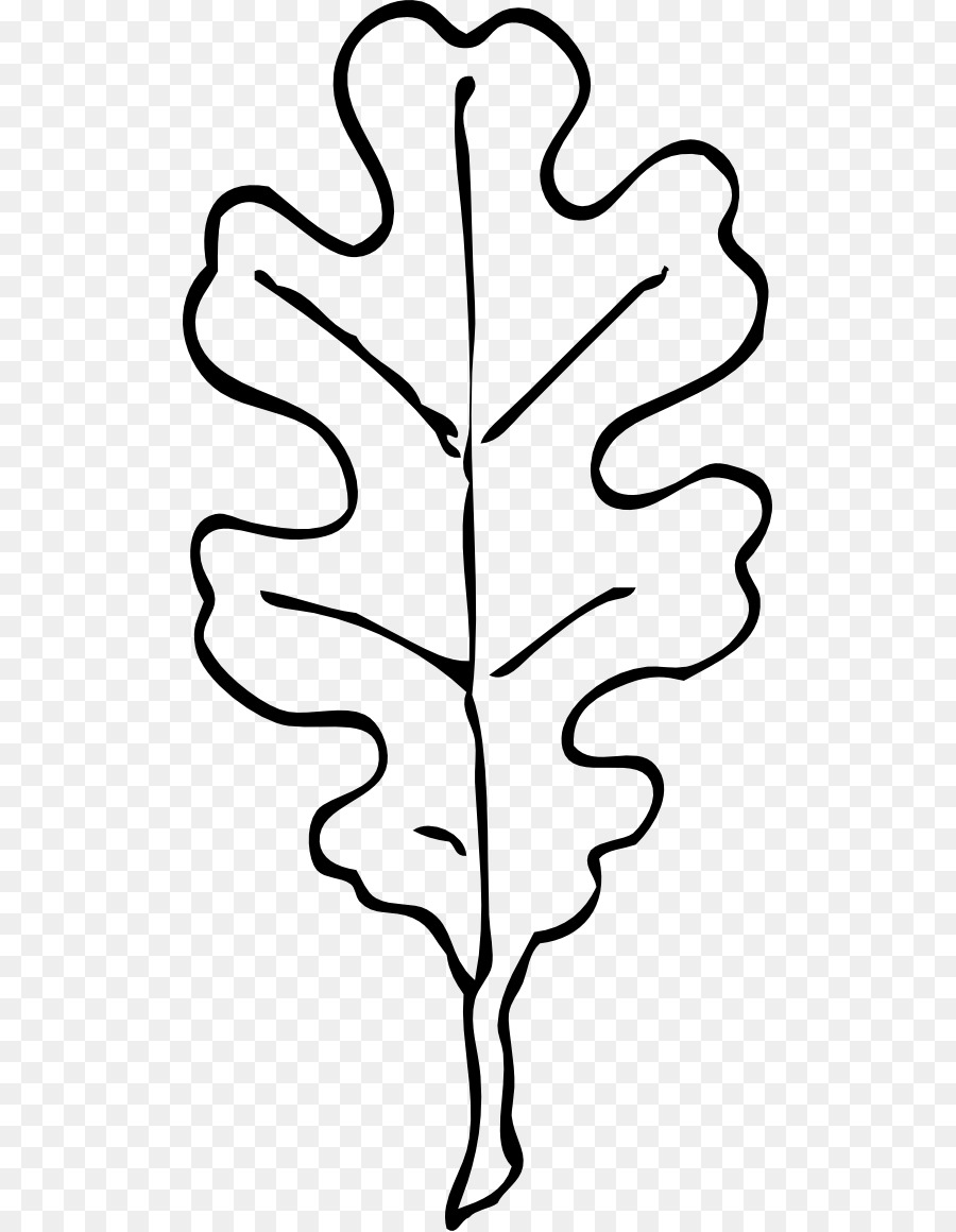 Leaf White oak Swamp Spanish oak Quercus velutina Clip art.
