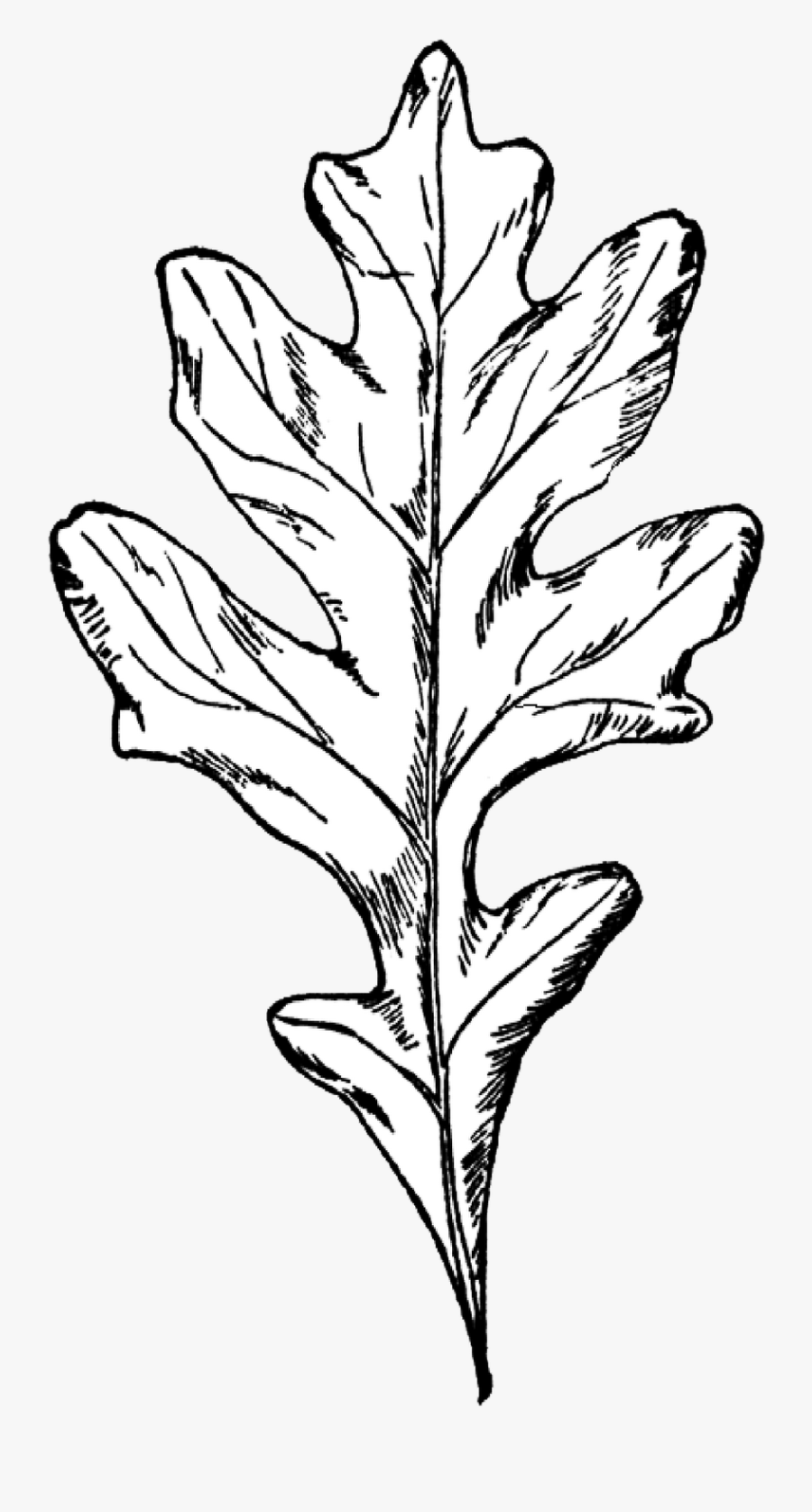 Oak Clipart Black And White.