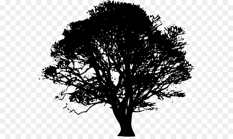 Oak Tree Silhouette png download.