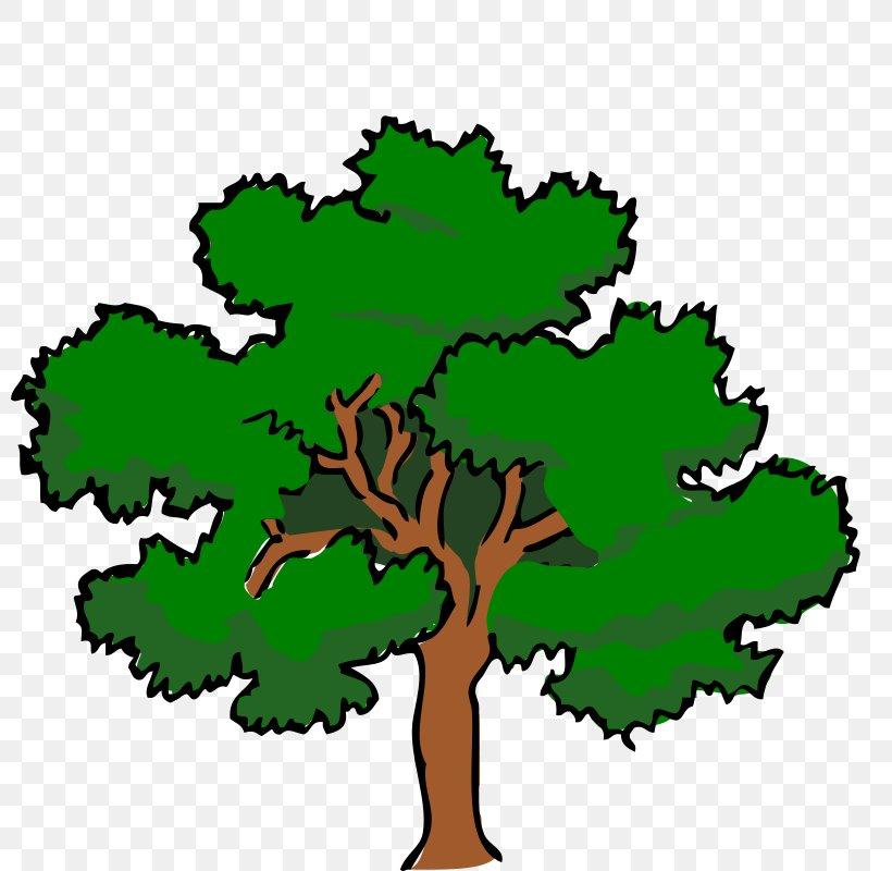 White Oak Tree Swamp Spanish Oak Clip Art, PNG, 800x800px.