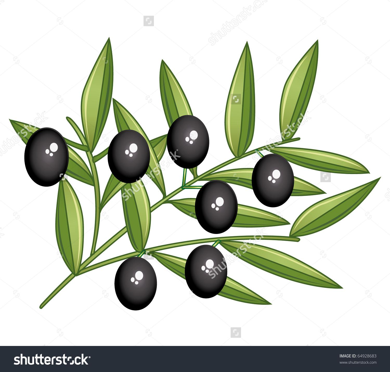 Black Olives Branch Isolated On White Stock Illustration 64928683.