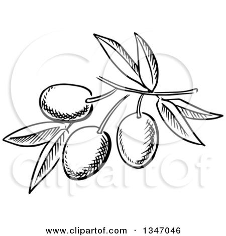 Similiar Black And White Olive Keywords.