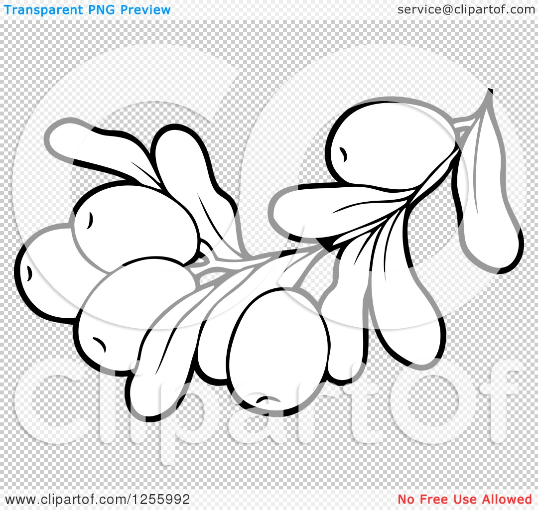 Clipart of a Black and White Greek Olive Branch.