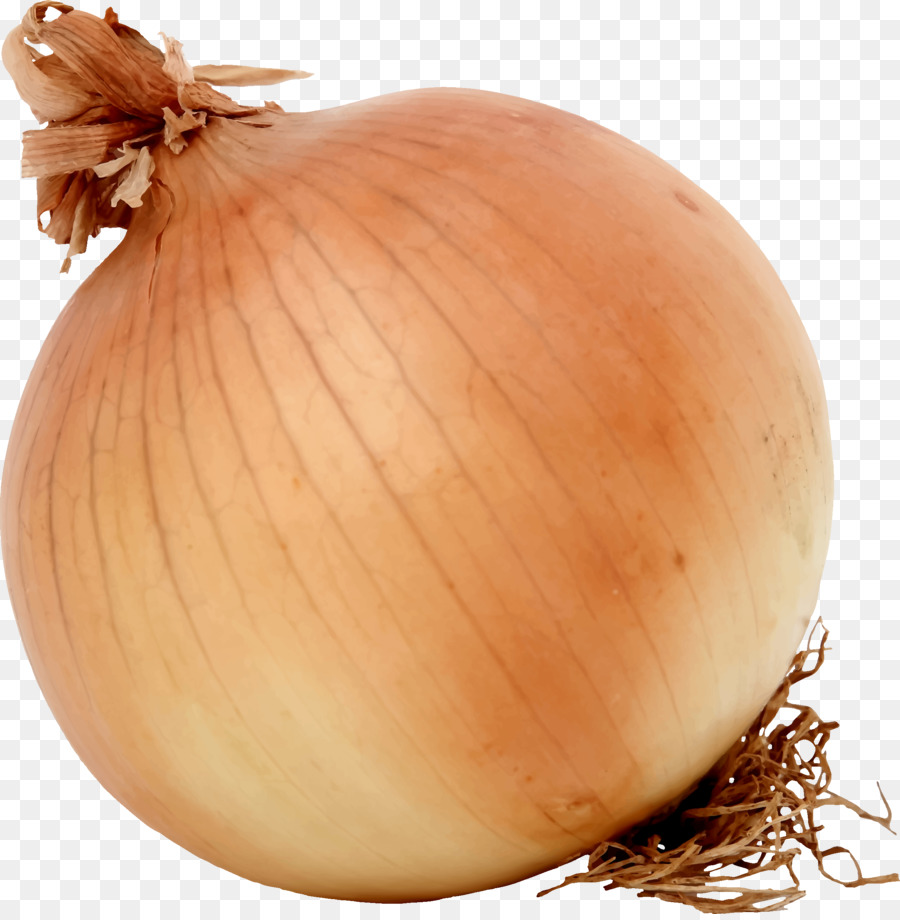 Onion Cartoon clipart.