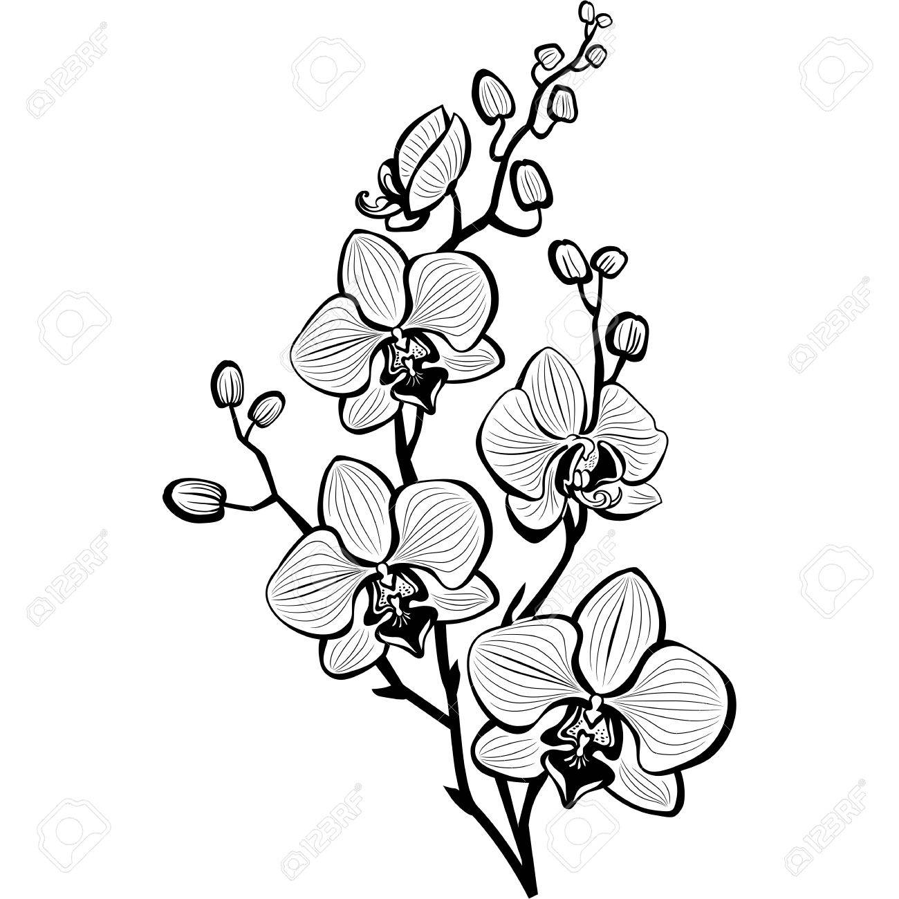 Orchid Flower Clipart Black And White.