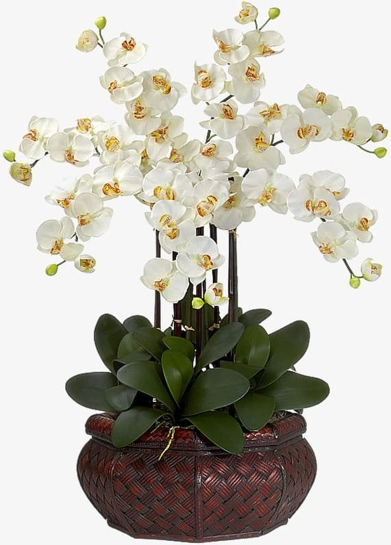 White Orchid Flowers PNG, Clipart, Flowers, Flowers Clipart.