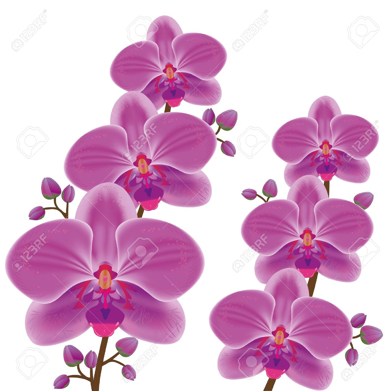 Purple Orchid Flower Clipart.