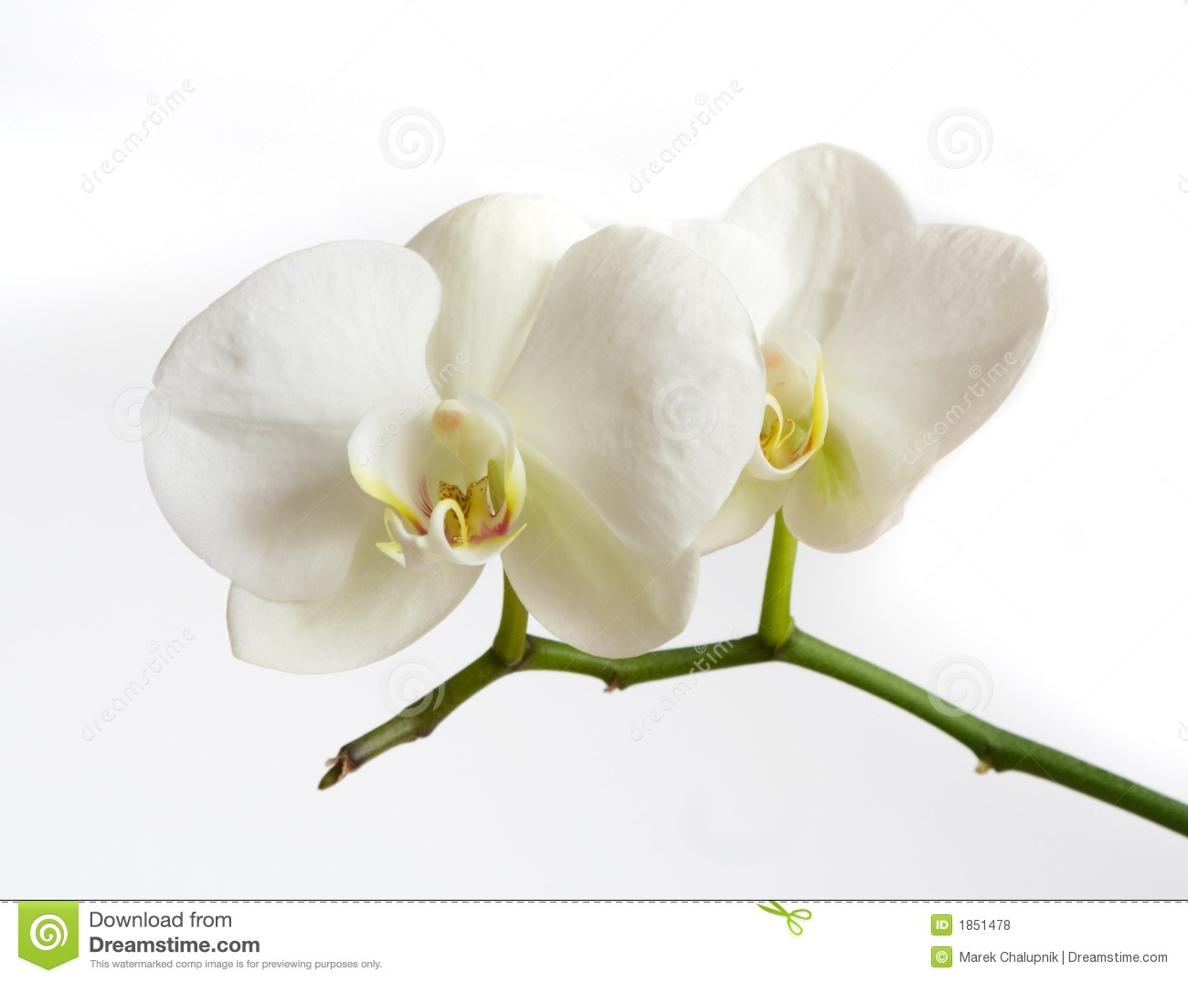 Orchids Soil With White Orchid Flower Royalty Free Stock Image.