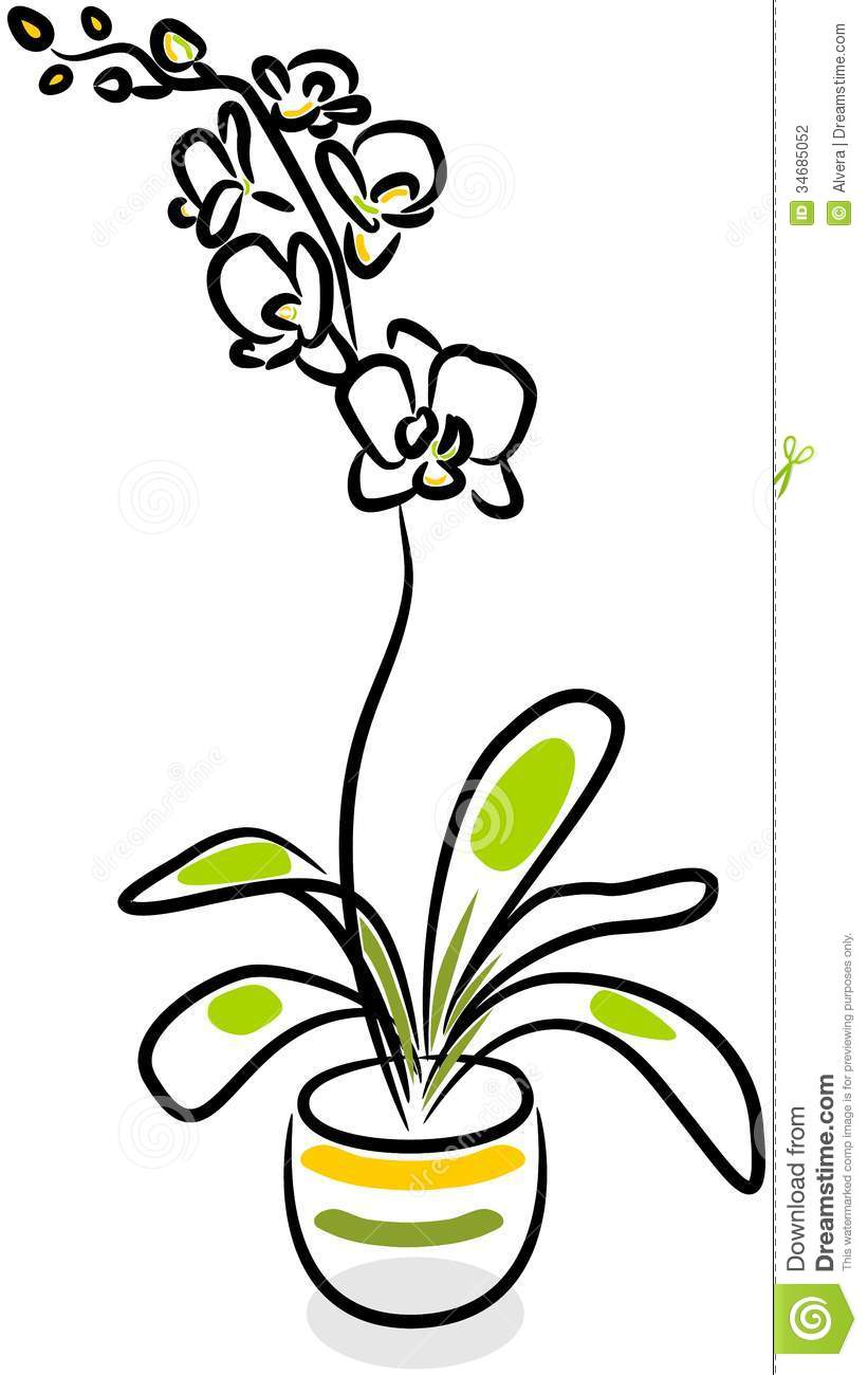 White Orchid Clipart.