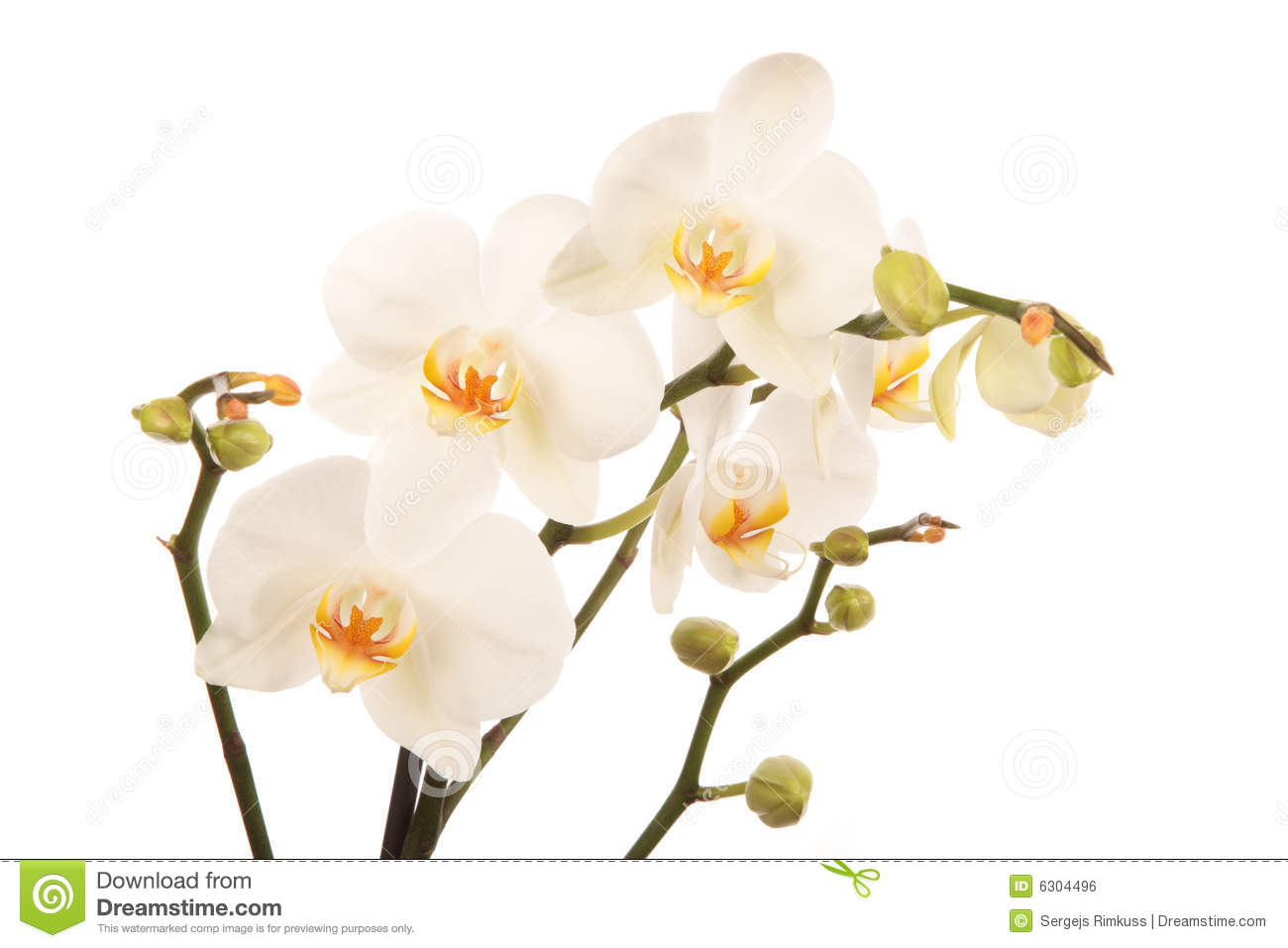 gaeroladid: White Orchid Clipart Images.
