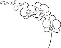 White Orchid Flower Clip Art.