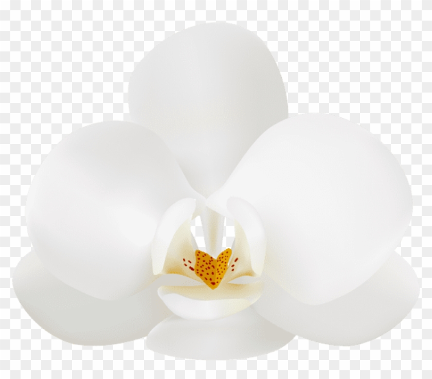 Free Png Download White Orchid Png Images Background.