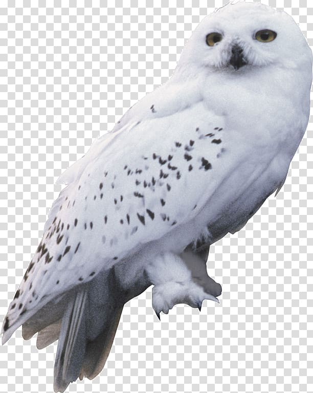 White owl, Harry Potter and the Chamber of Secrets Owl.