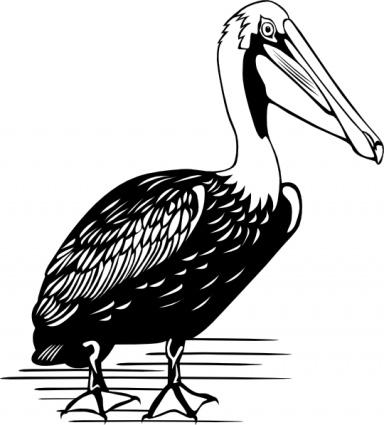 White Pelican Clipart.