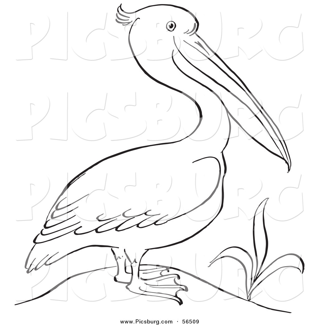 Clip Art of a Pelican Standing Beside a Plant.