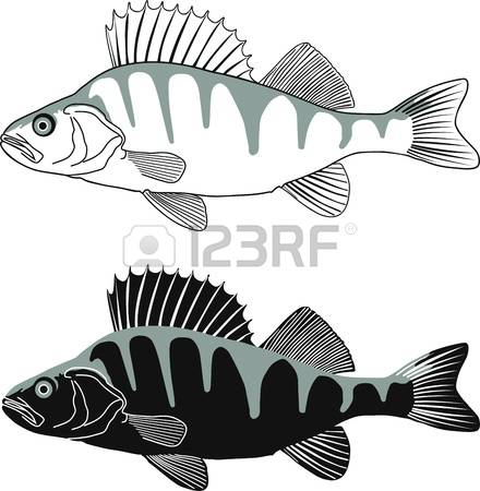 5,364 Perch Stock Vector Illustration And Royalty Free Perch Clipart.