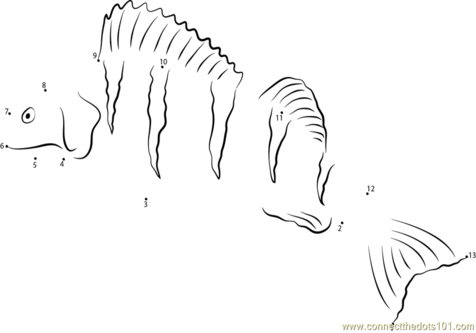 White Perch Coloring Pages coloring page, coloring image, clipart.