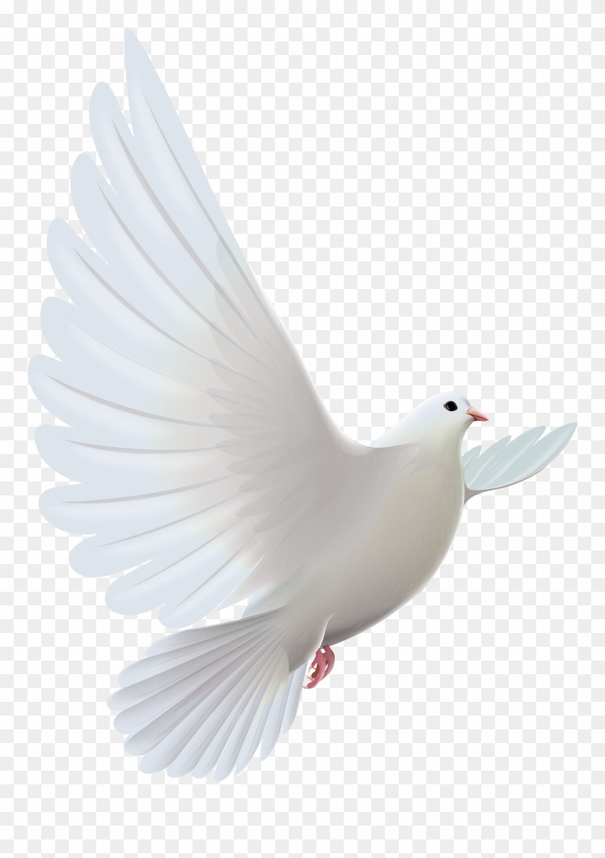 Pigeon Clip Art Images Free.