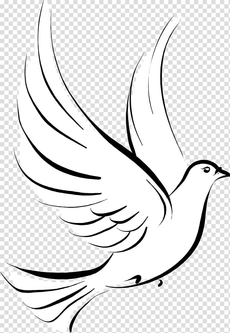 White pigeon illustration, Columbidae Stencil Drawing , DOVE.