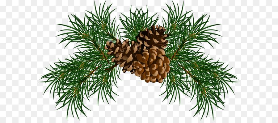 Conifer cone Eastern white pine Stone pine Clip art.