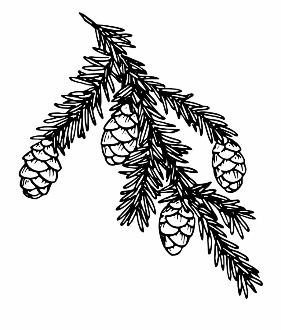 White Pine Tree Clip Art.