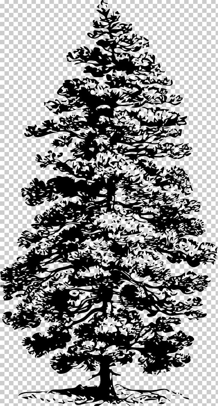 Eastern White Pine Tree PNG, Clipart, Art, Black And White, Branch.