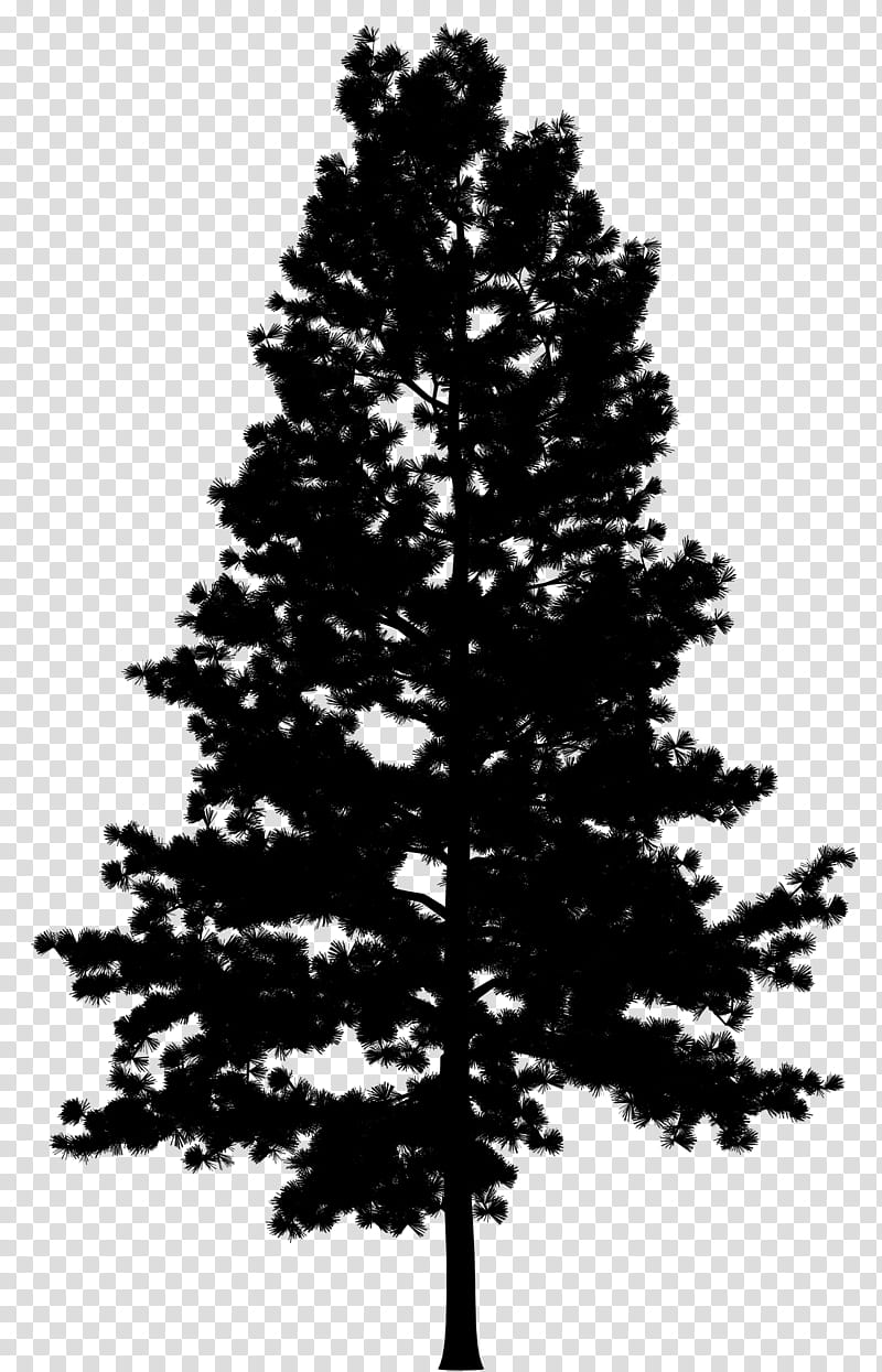 Christmas Black And White, Pine, Tree, Drawing, Fir, Branch.