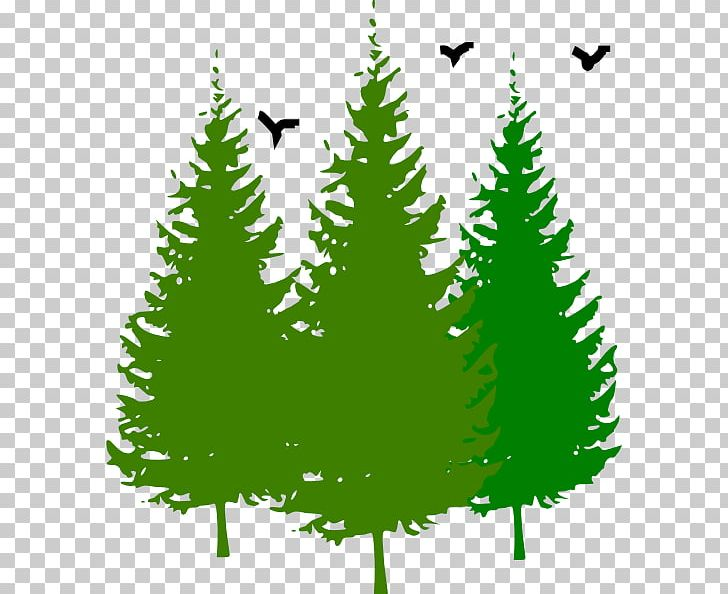 Eastern White Pine Tree PNG, Clipart, Art, Bird, Blog.