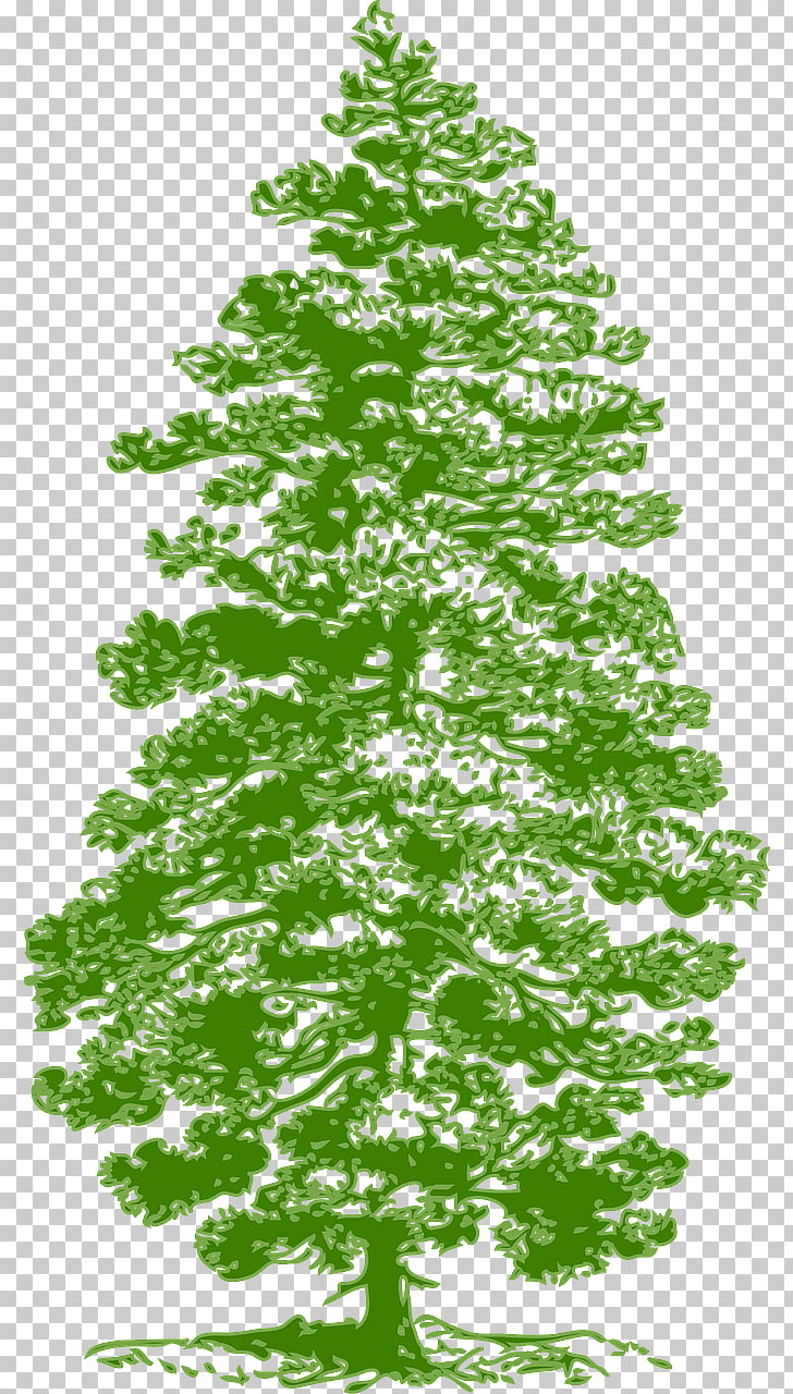 Eastern white pine Fir , tree PNG clipart.
