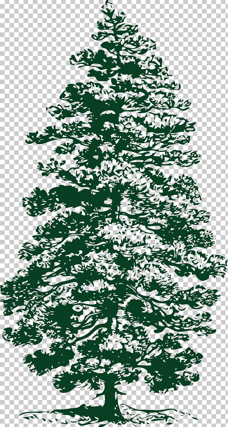 Eastern White Pine Tree PNG, Clipart, Art, Black And White.