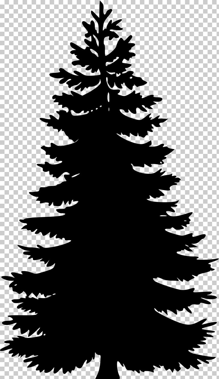Eastern white pine Tree , tree PNG clipart.