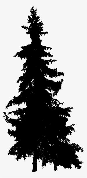 Pine Tree PNG, Free HD Pine Tree Transparent Image.