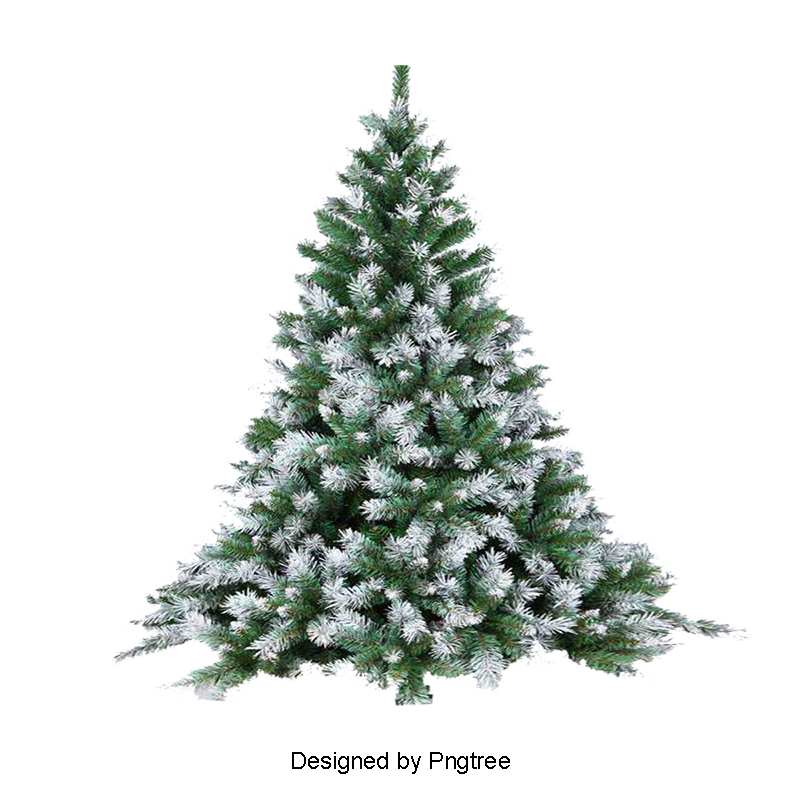 Pine Tree Png, Vector, PSD, and Clipart With Transparent Background.