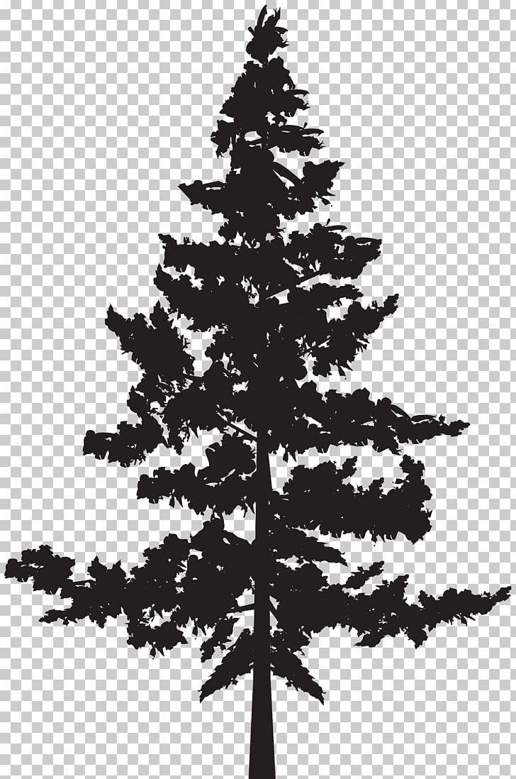 Black Pine Tree Pinus Contorta PNG, Clipart, Black And White, Black.