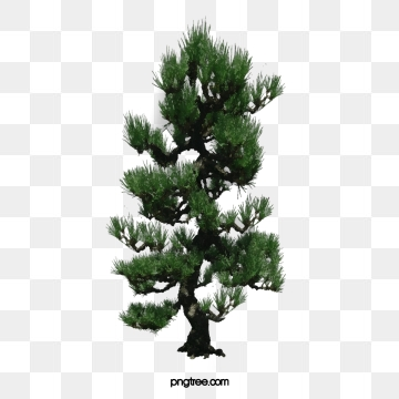 Tree PNG Images, Download 55,937 PNG Resources with Transparent.