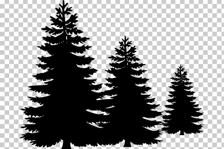 Pine Tree PNG, Clipart, Black And White, Branch, Christmas.