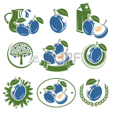 3,678 White Plum Stock Vector Illustration And Royalty Free White.