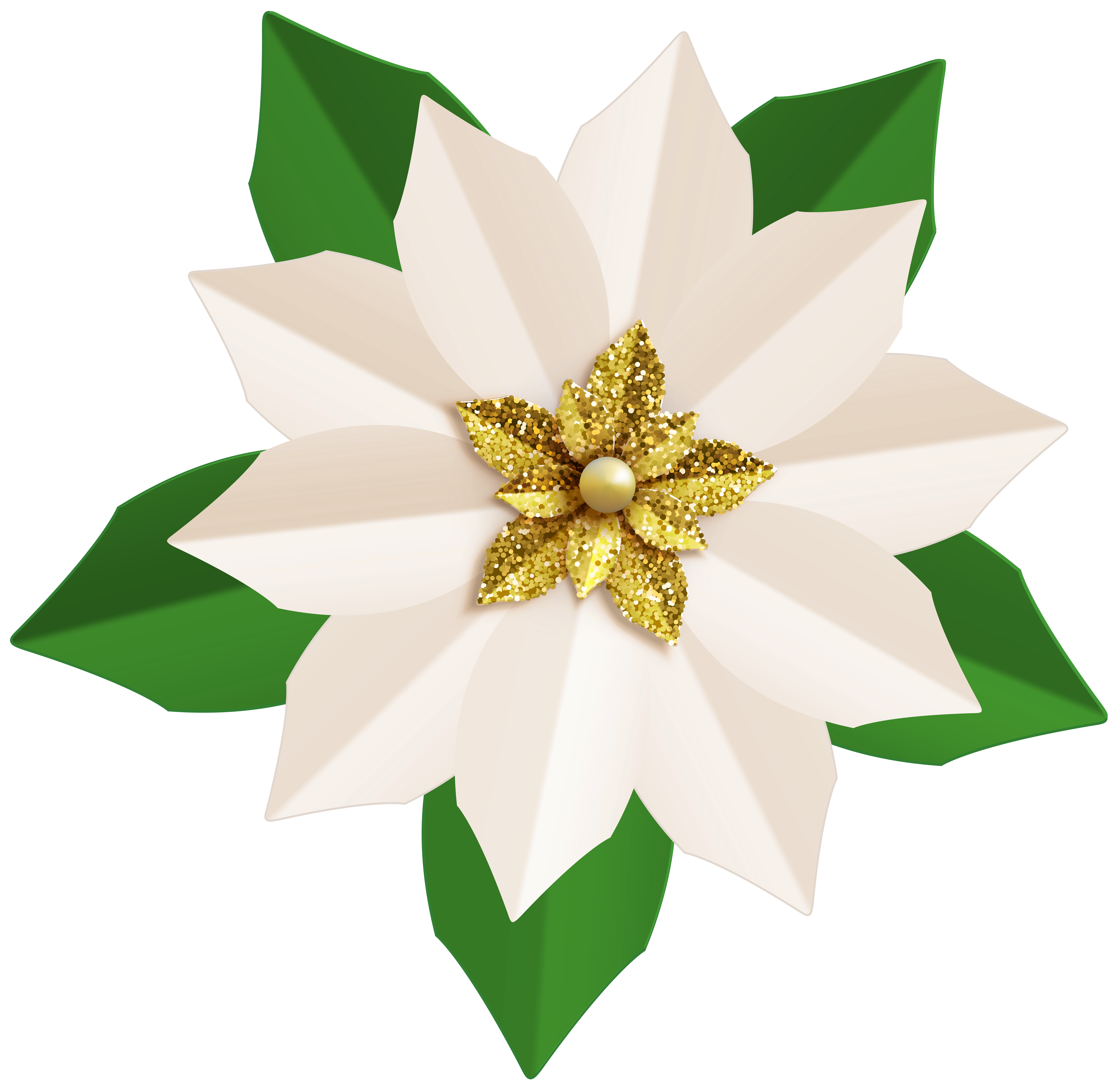Christmas White Poinsettia PNG Clip Art Image.