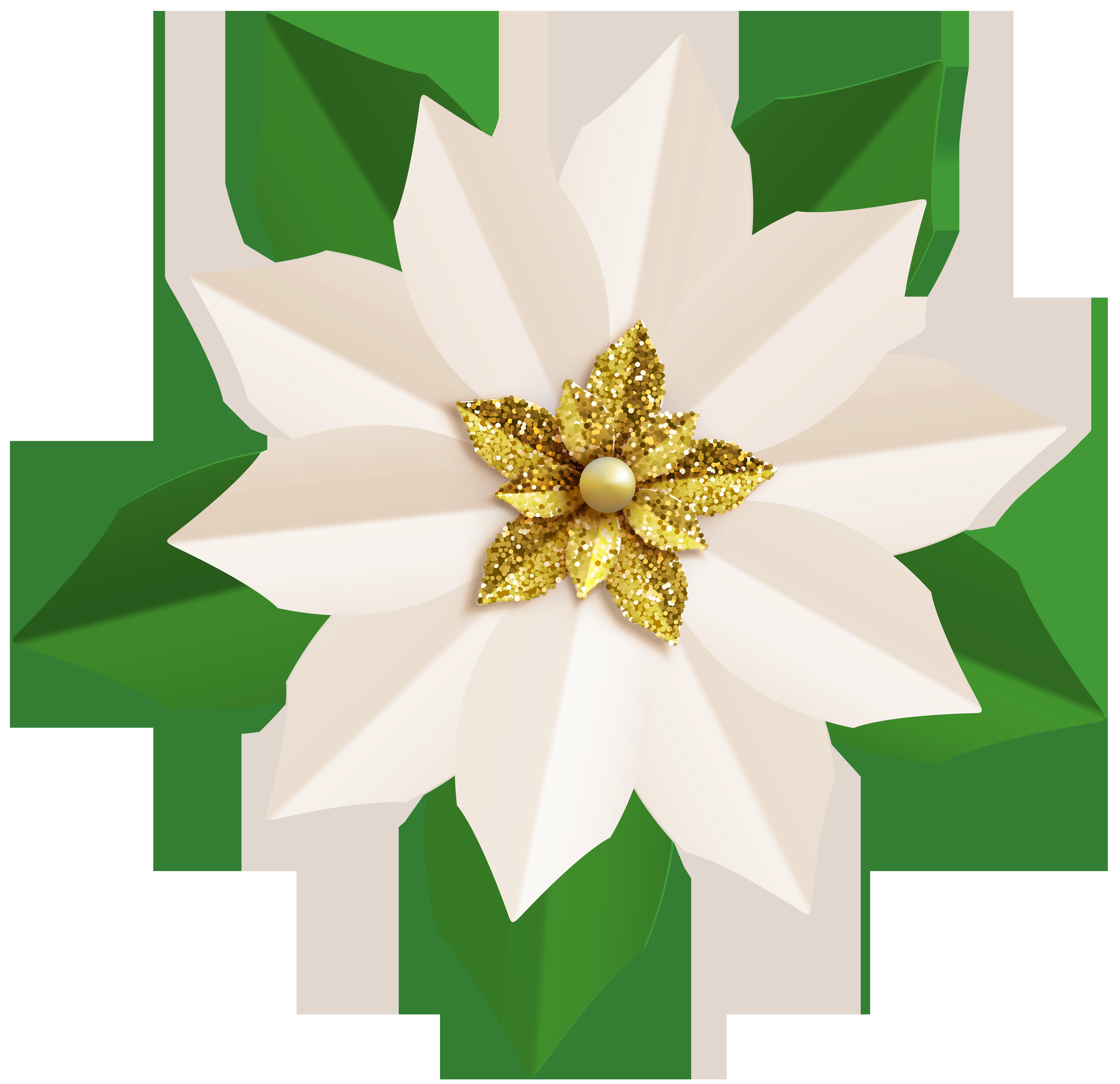 Christmas White Poinsettia PNG Clip Art Image.