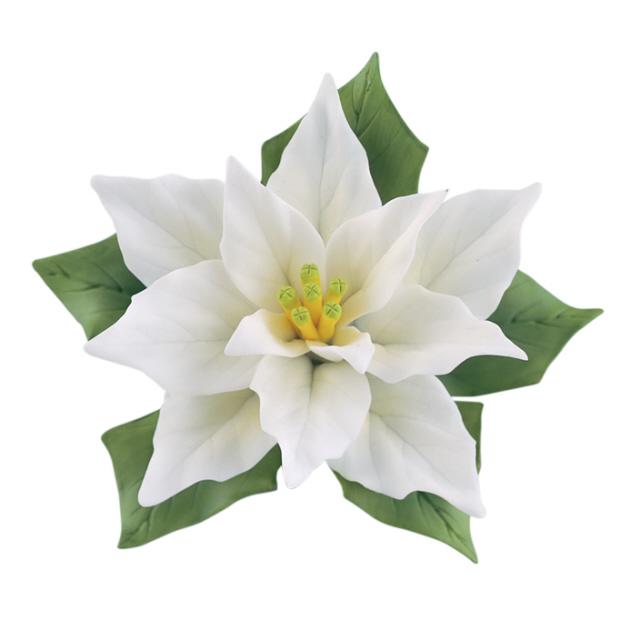White Poinsettia Clipart.