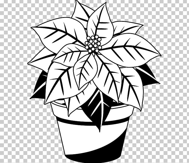 Poinsettia Christmas Black And White Red PNG, Clipart.