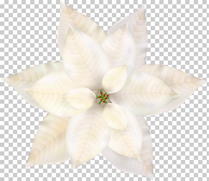 Petal, Christmas White Poinsettia , bloomed white petaled.